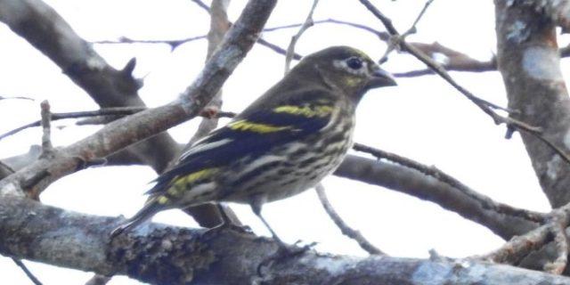 Potensi Fauna Burung di Area Pemetaan Grid Wilayah Resort Ampel TNGMb