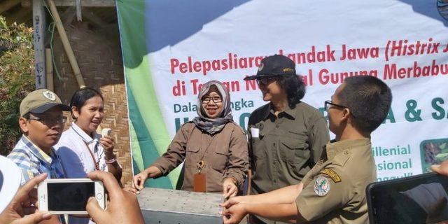 Pelepasliaran Landak Jawa, Wujud Upaya Pemulihan Ekosistem TN Gunung Merbabu