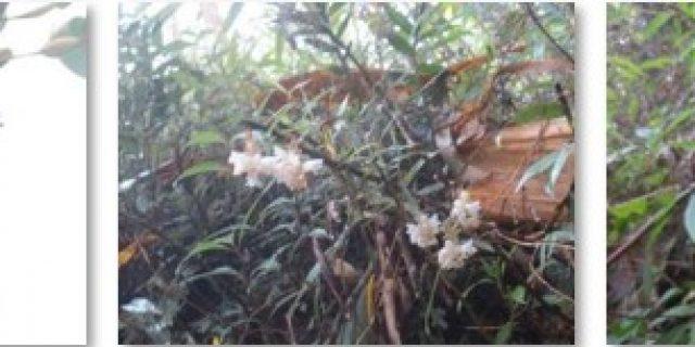 Kekayaan Flora Anggrek di Taman Nasional Gunung Merbabu