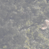 Perjumpaan Elang Jawa di kawasan Taman Nasional Gunung Merbabu