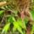 Komposisi Orchidaceae di Resort Kopeng TN Gunung Merbabu